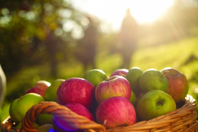 Cornish Orchards and the Environment