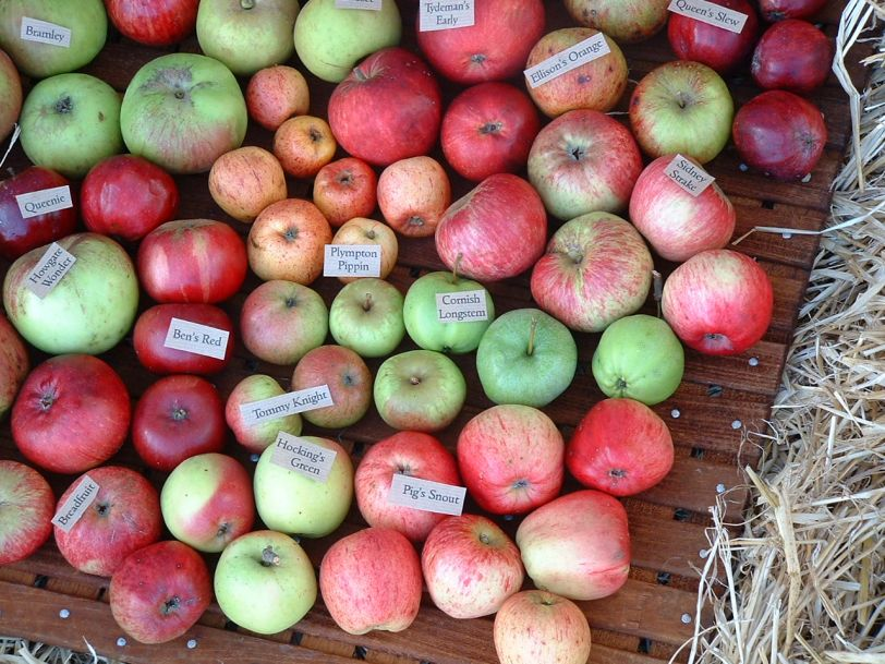 Importance of World Apple Day for Cornish apple varieties