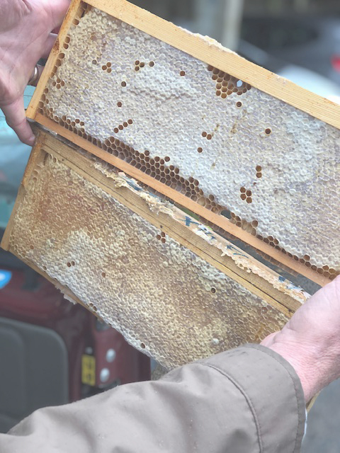 Roger holding the beeswax structure